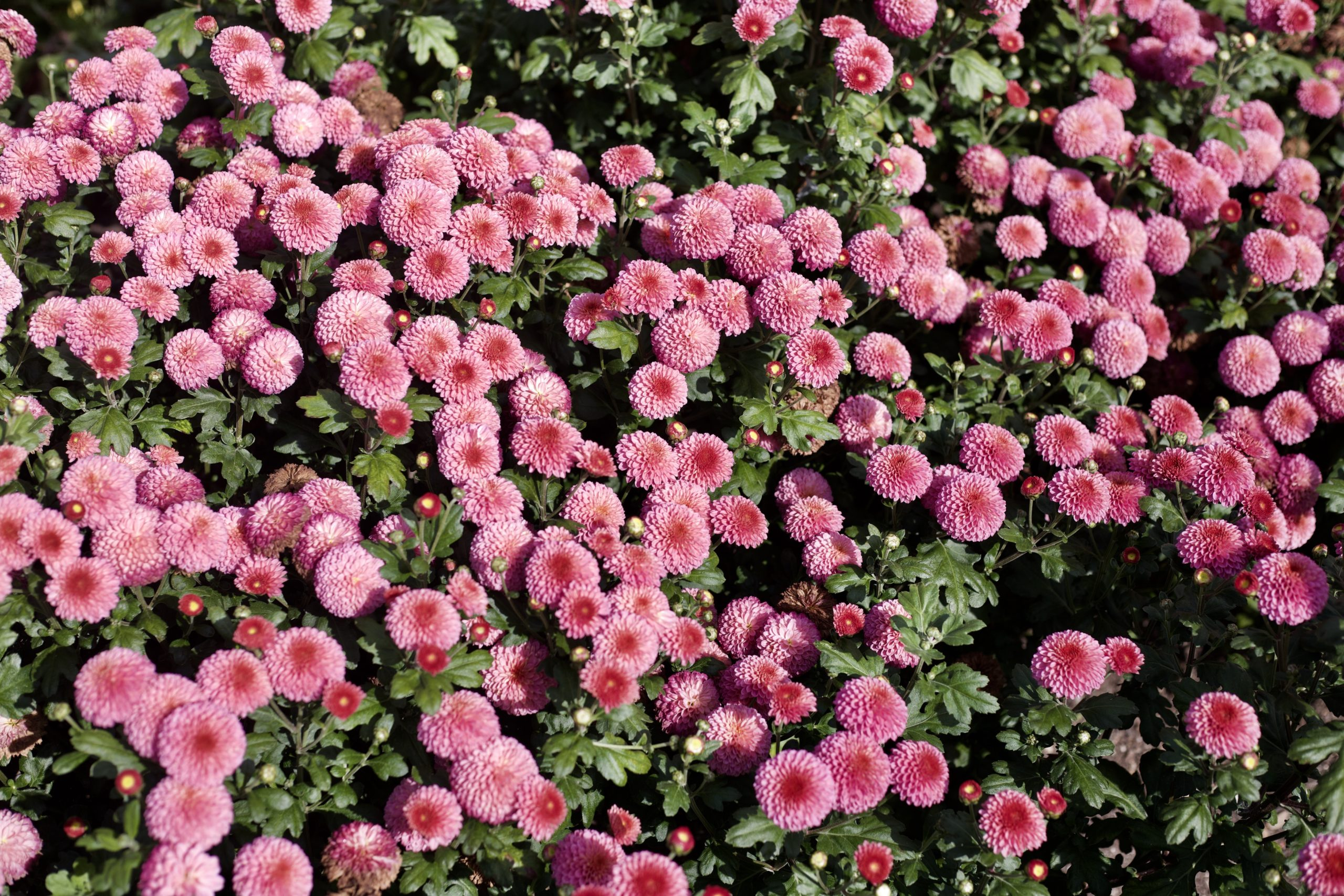 Top 10 Easiest Cut Flowers To Grow – Annuals